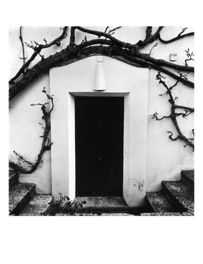 """Publicadas fotografías de mi  serie """"Glicinas"""" en la Revista de poesía Boxcar"""